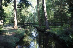 Forest scene with reflections in stream