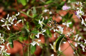 Bee and tiny fly