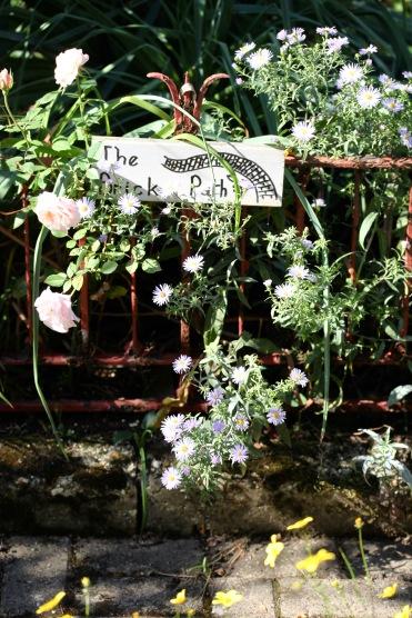 Asters, patio rose, bidens