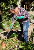 Jackie digging Weeping Birch Bed