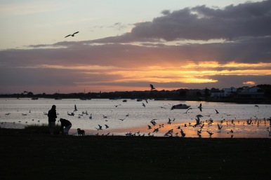 Sunset and seabirds