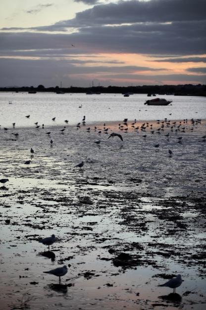 Sunset and seabirds