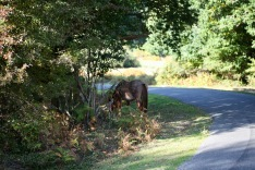 Pony by roadside
