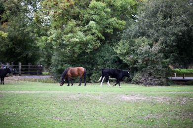 Pony and cattle
