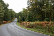 Brockenhurst/Beaulieu road
