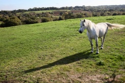 Pony in landscape