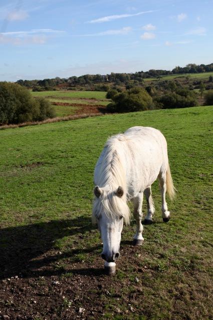 Pony and landscape
