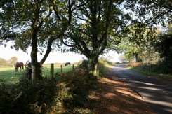 Braggers Lane and horses in field