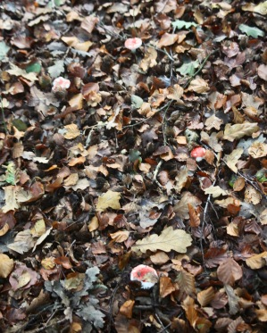 Mushrooms and autumn leaves