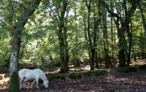 Pony in forest