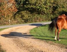 Shadows of ponies