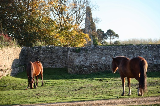 Ponies and granary ruins