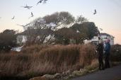 Feeding gulls