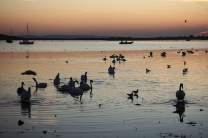 Waterfowl after sunset
