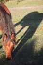Pony and shadow