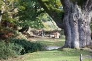 Tree trunk, child on tyre swing