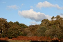 Trees, bracken, clouds