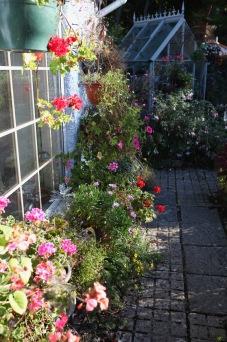 Geraniums, petunias