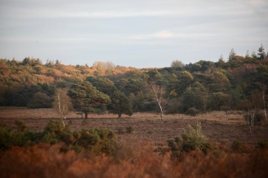 Trees and bracken
