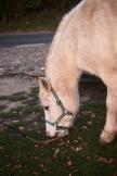 Pony Lucy
