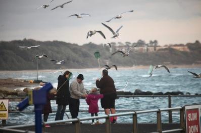 Gulls and crabbers
