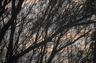 Branches at dusk