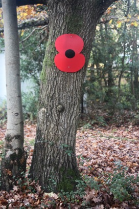 Poppy on tree