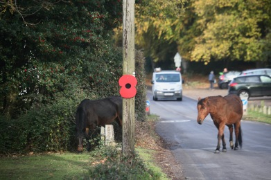 Poppy on tree, ponies