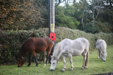 Poppy and ponies
