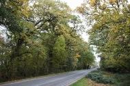 Roadway between St Leonard's and Beaulieu