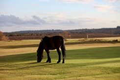 Pony on green
