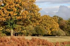Autumn trees and bracken