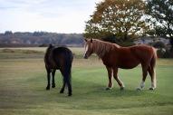 Ponies on green