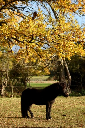 Pony and autumn leaves