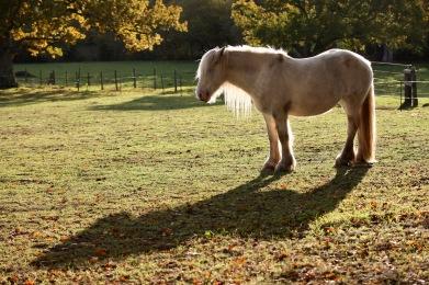 Pony and shadpw