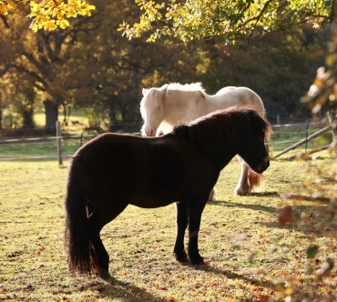 Pony and farm horse
